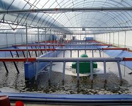 바이오플락 양식시설