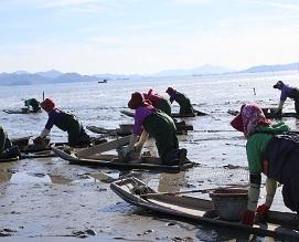 갯벌 맨손 어업